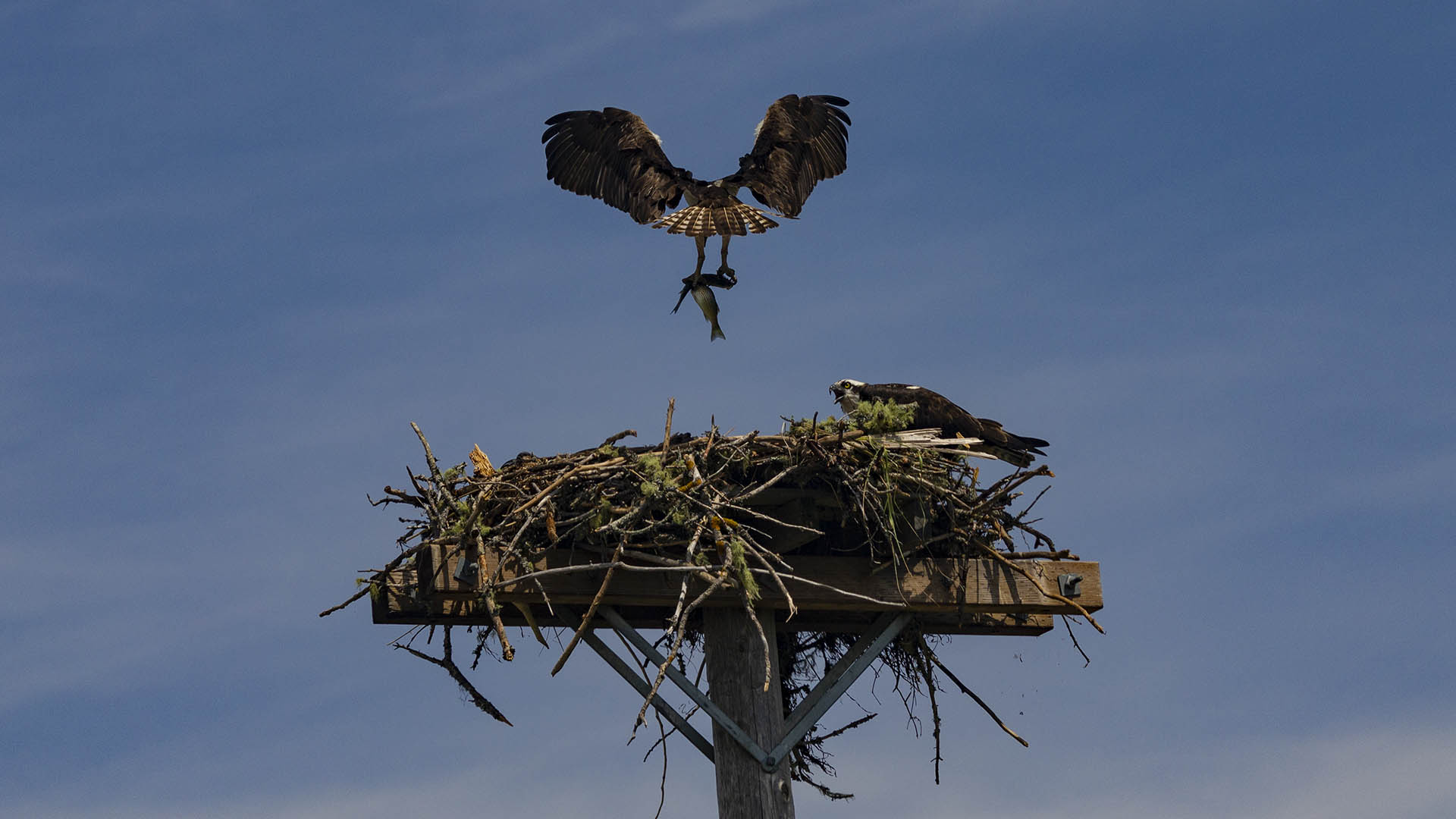 Osprey Lunch Delivery